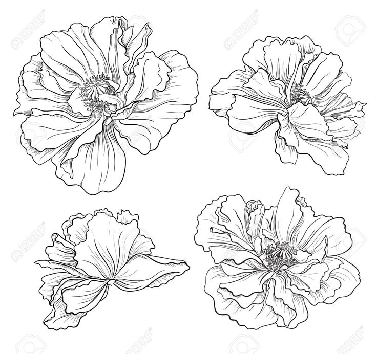 1000+ ideas about Hand Drawn Flowers on Pinterest.