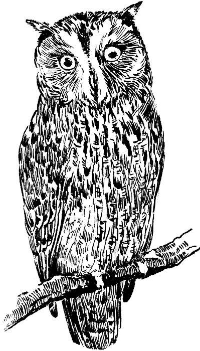 Grey Little Bird Clip art.