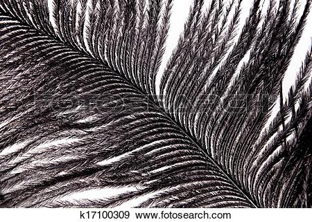 Stock Photograph of black feather plumage texture k17100309.