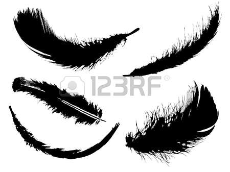 1,702 Black And White Plumage Stock Illustrations, Cliparts And.