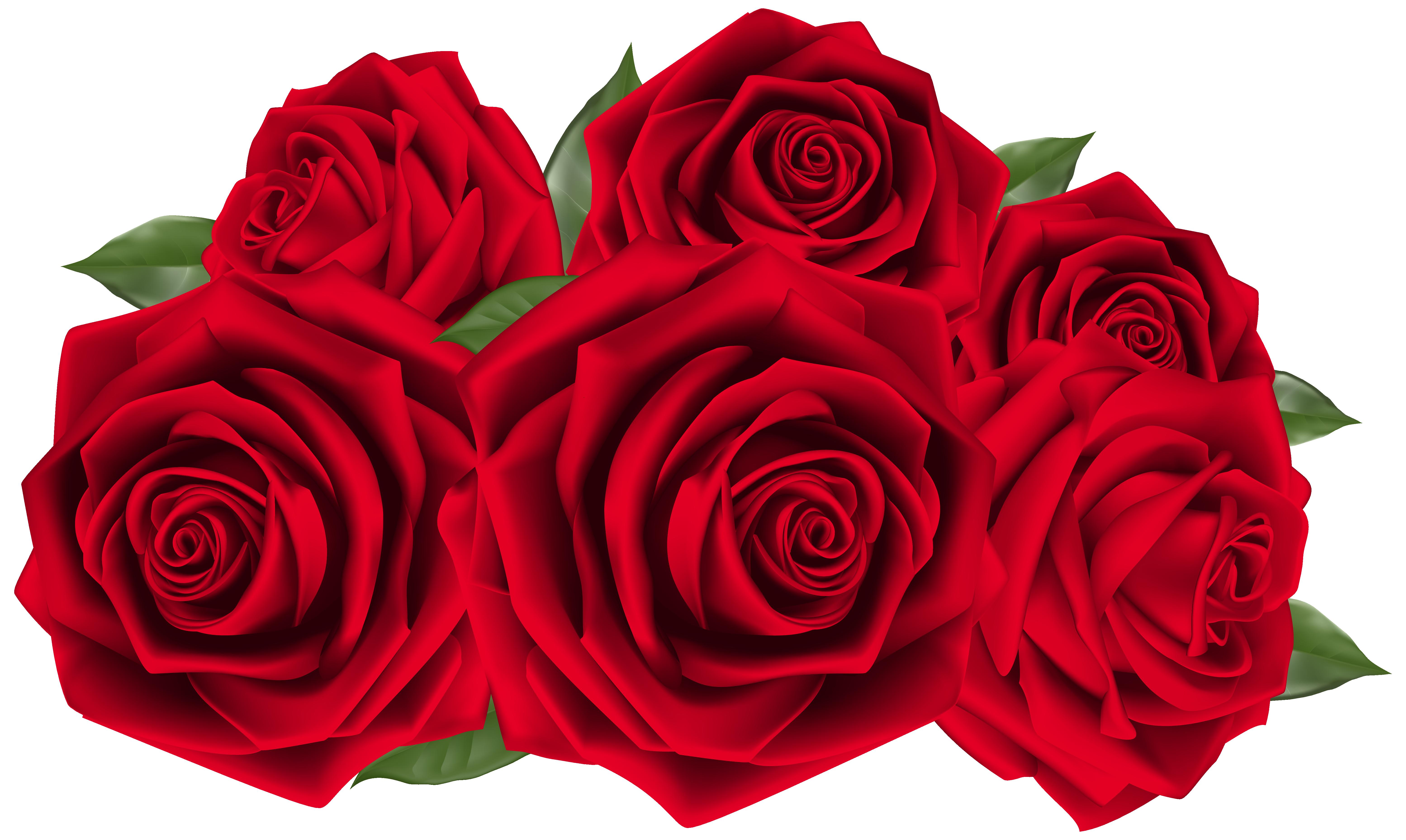 Beautiful Dark Red Roses PNG Clipart Image.