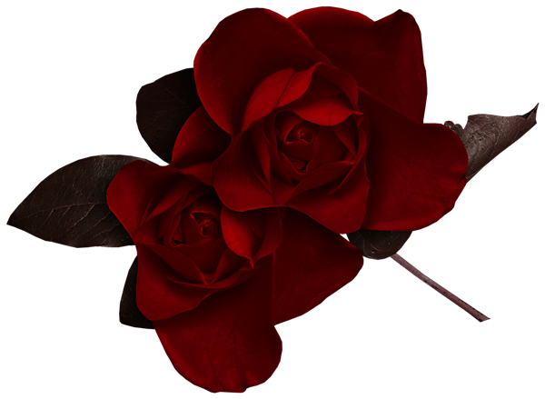 Dark_Red_Rose_Clipart.png?m=1371679200.