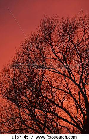 Picture of sky, sunset, dusk, dawn, sunrise, dark u15714517.