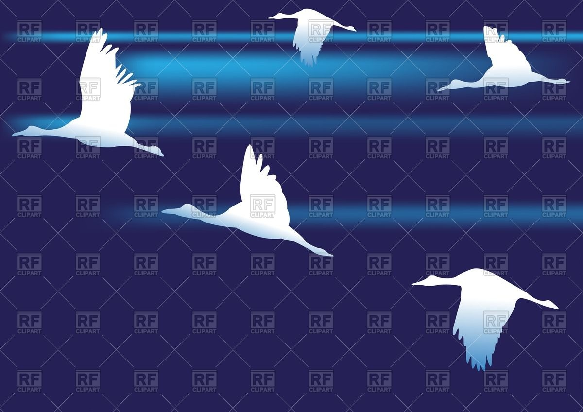 Silhouette of white birds on dark sky Vector Image #63139.