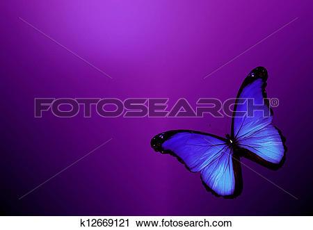 Clipart of Violet butterfly on dark violet background k12669121.