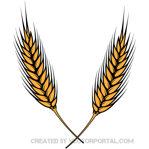 Wheat Vector Illustrator.