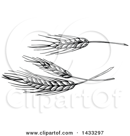 Royalty Free Wheat Illustrations by Vector Tradition SM Page 1.