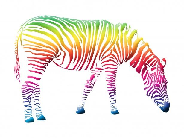 Zebra Kolorowe Clipart Darmowe zdjęcie.