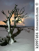 Dartmoor Clipart and Stock Illustrations. 6 dartmoor vector EPS.