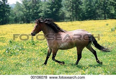 Pictures of Dartmoor, Dartmoor Ponies, Dartmoor Pony, Juniors.