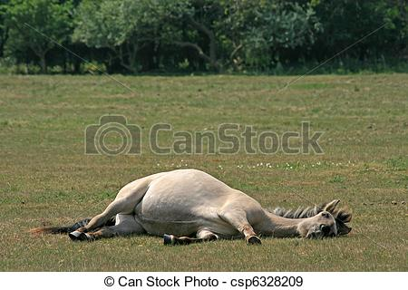 Pregnant horse Images and Stock Photos. 70 Pregnant horse.