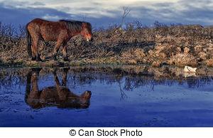 Stock Image of Dartmoor Pony csp9469826.
