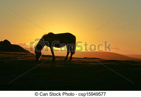 Picture of Dartmoor Pony at Sunset.