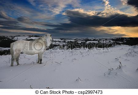 Stock Photos of Solitary Dartmoor pony in snow.