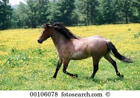 Trotted Stock Photo Images. 129 trotted royalty free pictures and.