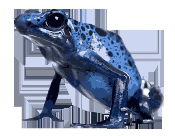 Poison dart frog clipart.