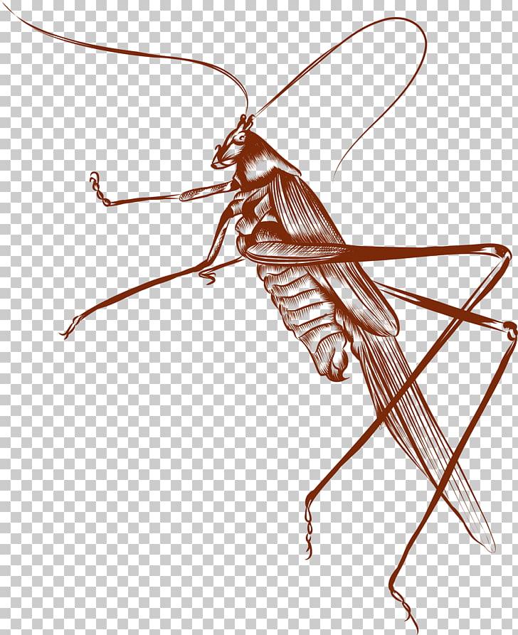 Brown Euclidean , Brown cricket PNG clipart.