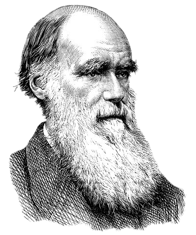 Charles Darwin Black and White Drawing transparent PNG.