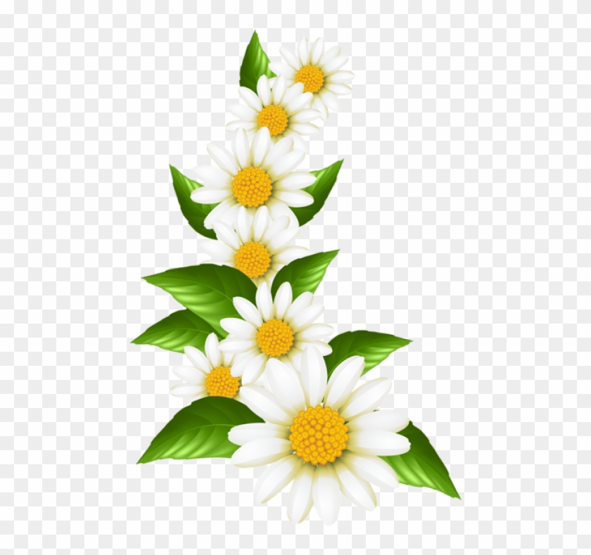 Daisies clipart graphic, Daisies graphic Transparent FREE.