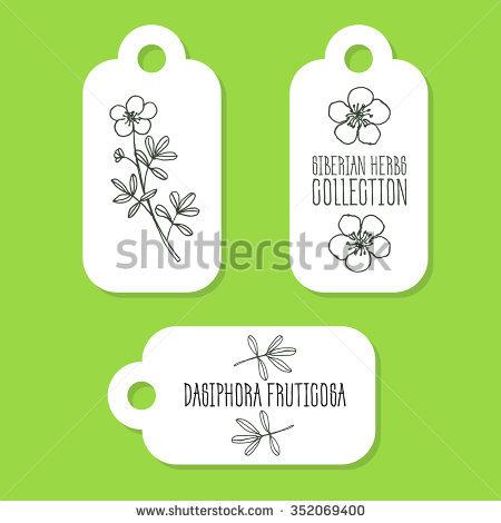 """potentilla Fruticosa"""" Stock Photos, Royalty."""