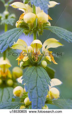 Stock Image of flourish, detail, Detailaufnahme, details, flora.