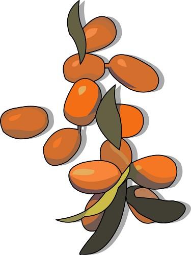 Dates Fruit Clipart.
