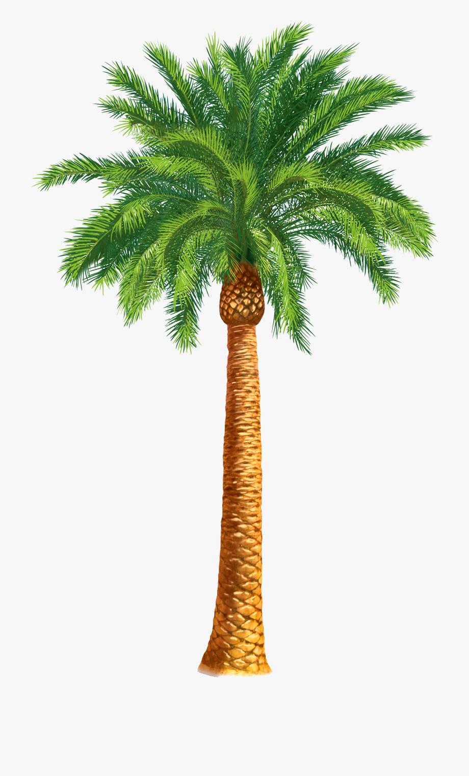 Palm Tree Clipart Khajur Tree.