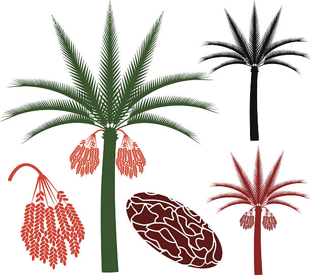 Best Date Palm Tree Illustrations, Royalty.