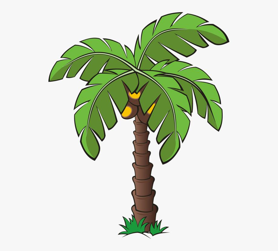 Palm Trees Canary Island Date Palm Plants.