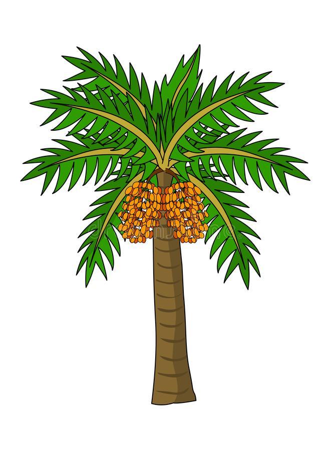 Date Tree Stock Illustrations.