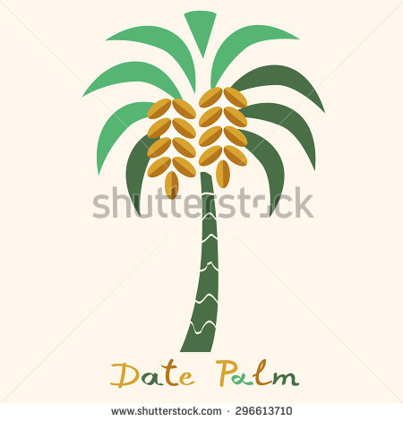 Date Palm Stock Photos, Royalty.