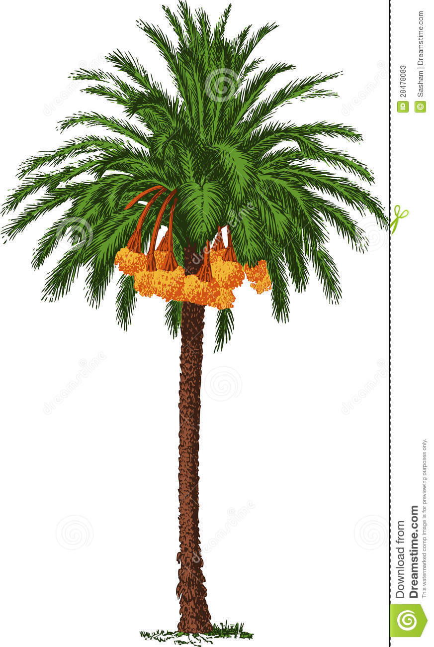 Date tree clipart #1