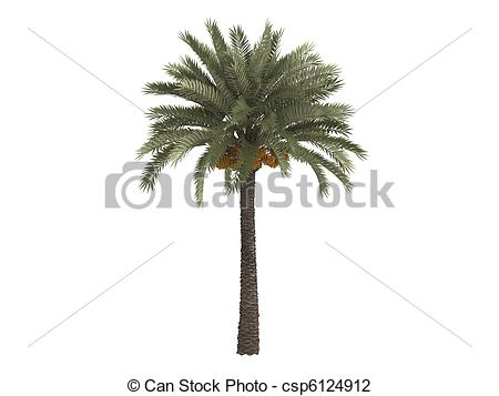 Date palm Illustrations and Stock Art. 772 Date palm illustration.