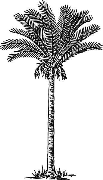 Date Palm clip art Free vector in Open office drawing svg ( .svg.