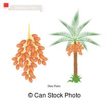 Dates palm tree fruit Illustrations and Stock Art. 23 Dates palm.