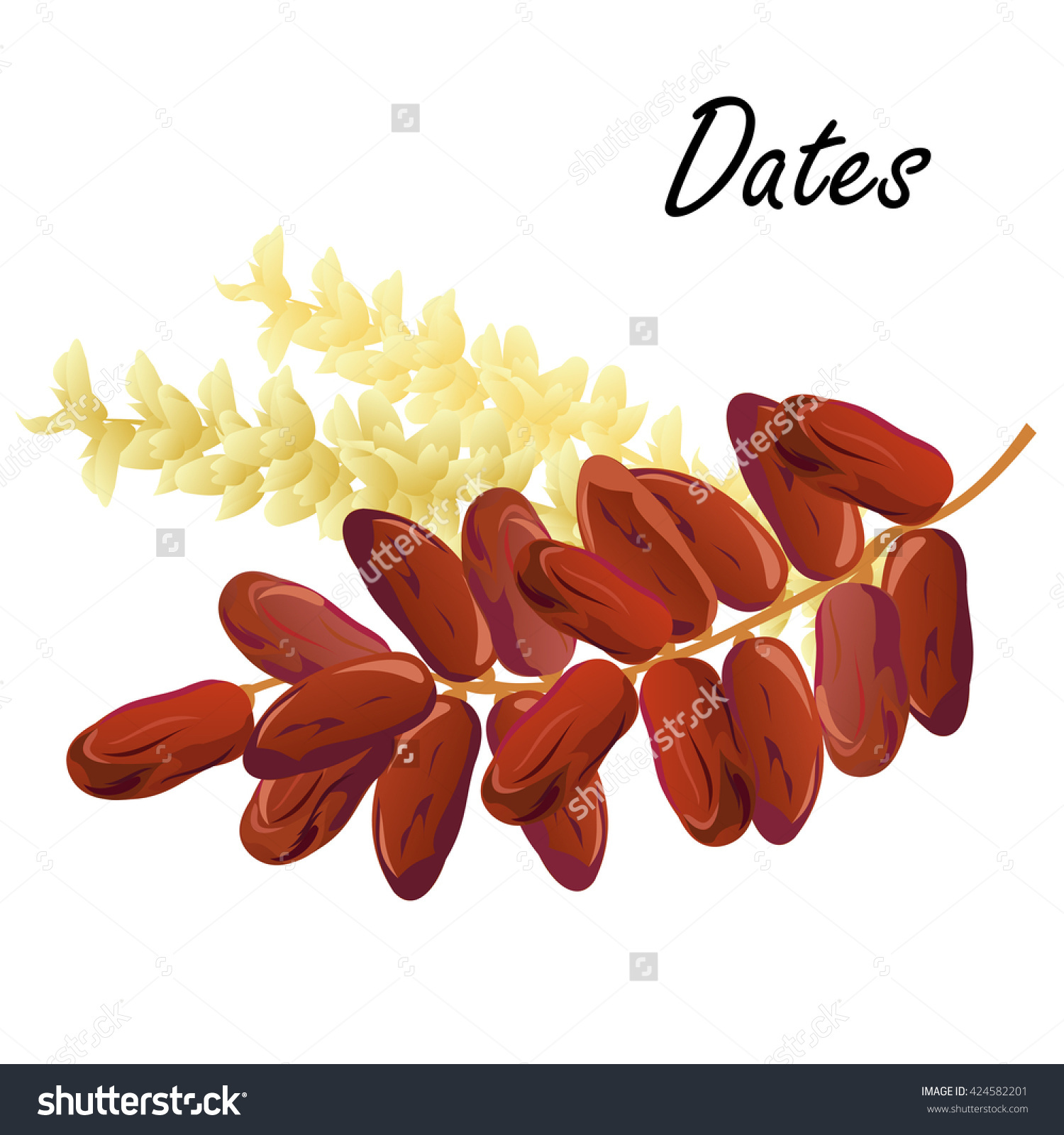 Dates Hand Drawn Vector Illustration Dried Stock Vector 424582201.