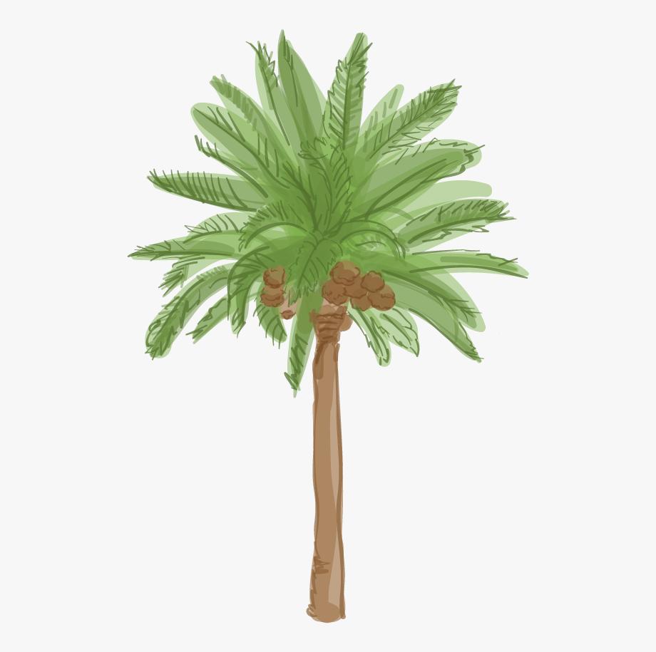 Canary Island Date Palm.