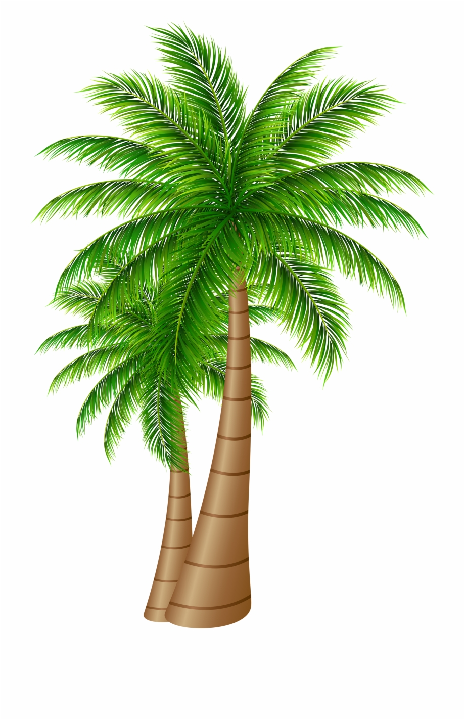 Palm Tree Clipart Transparent Png.