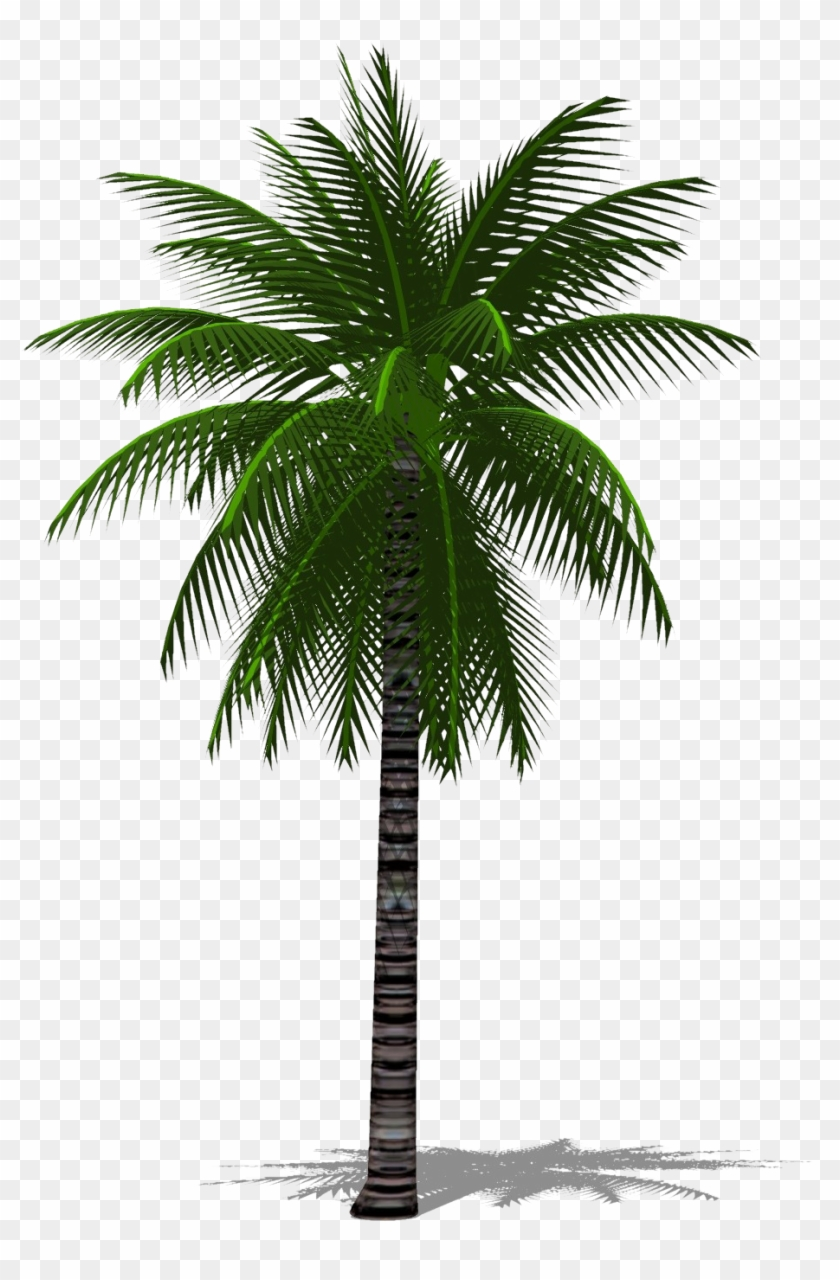 3d Palm Tree Png.
