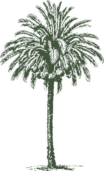 Date Palm Clip Art at Clker.com.