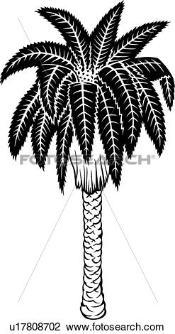 Clipart of , date palm, tree, varieties, u17808702.
