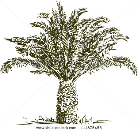 Date palm drawing.