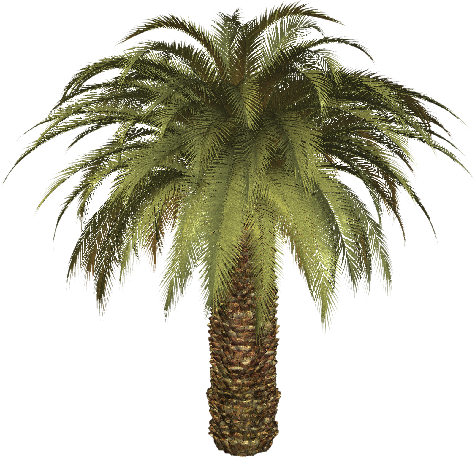 Palm tree PNG images, download free pictures.
