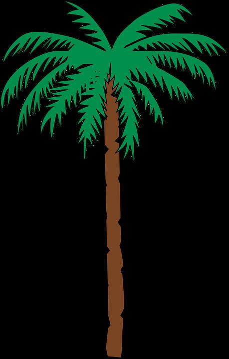 Date, Tree.