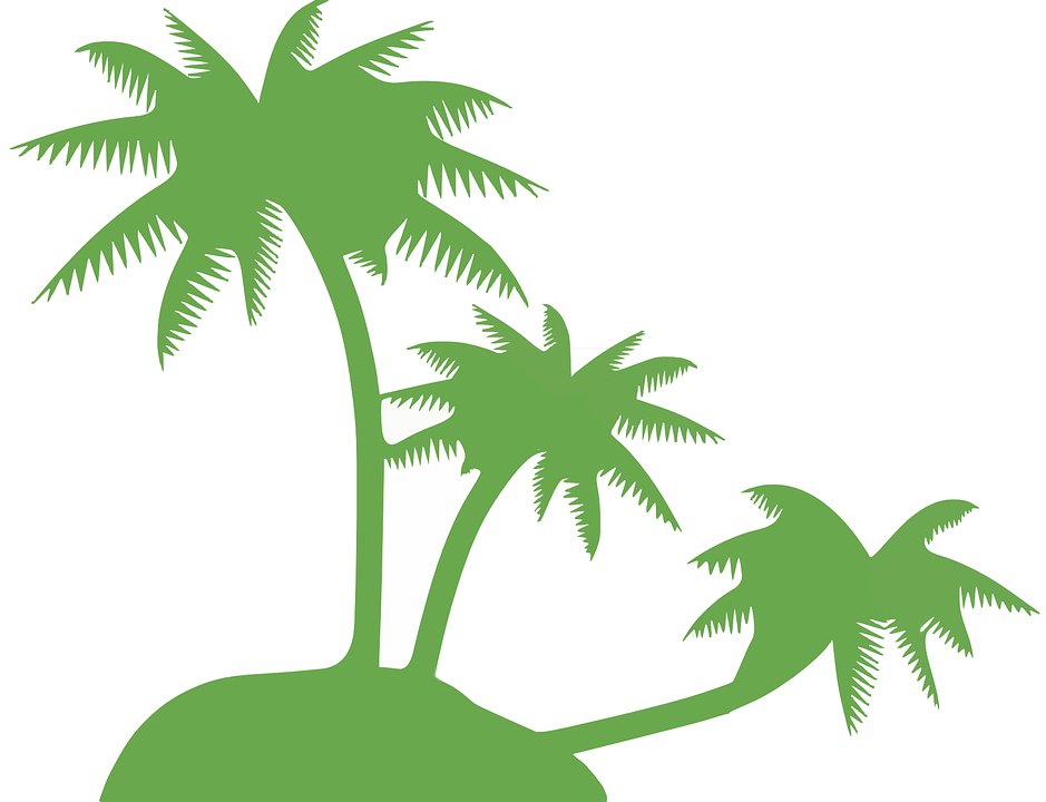 Free vector graphic: Coconut Palm, Palm Tree, Trees.