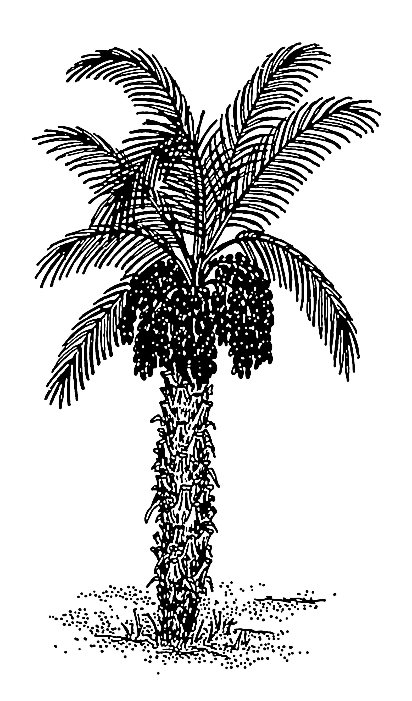 File:Date Palm 001.png.