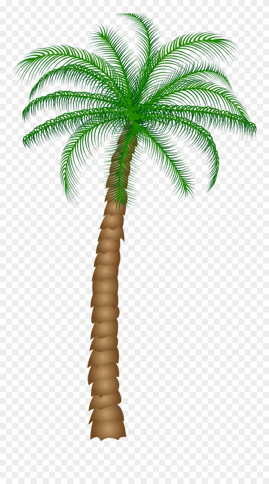 Date Palm Fruit Tree Clipart.