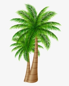 Dates Tree PNG Images, Free Transparent Dates Tree Download.