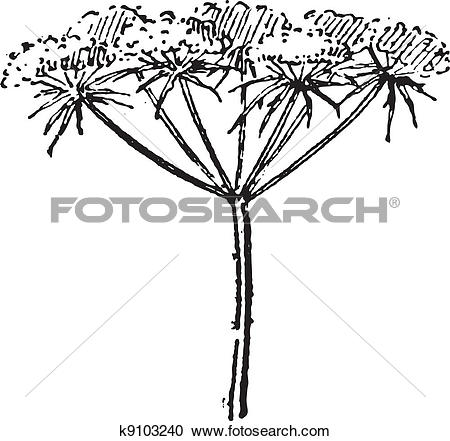 Clipart of Daucus carota or wild carrot, vintage engraving.