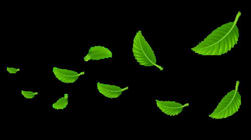 Leaf,Green,Plant,Flower,Tree,Branch,Flowering plant #4500128.